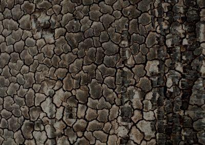 Brandmaterial_Holz
