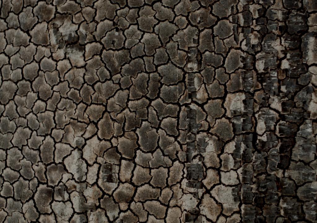 brandwand_holz-detail